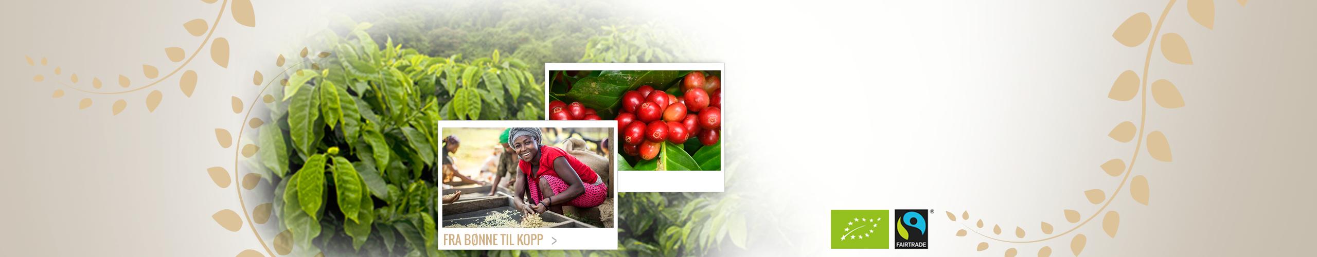 Økologisk og Fair Trade kaffe