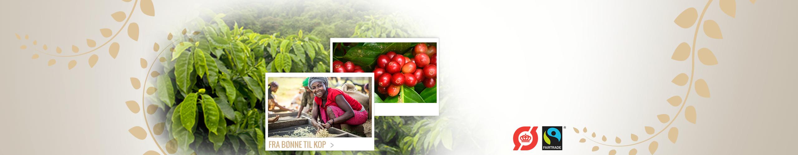 Økologisk og Fair Trade kaffe.